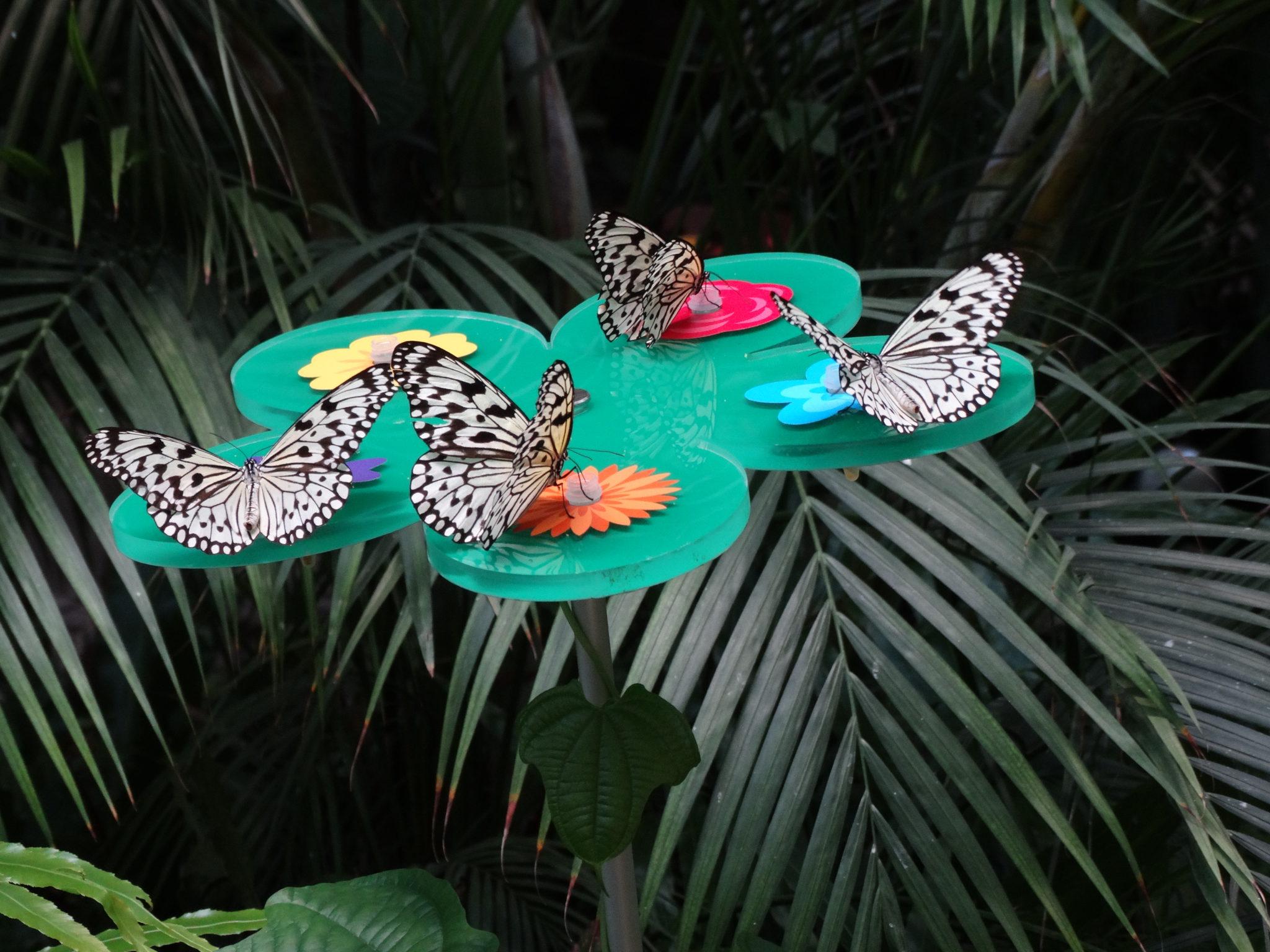 Zoo 4 juli 2017