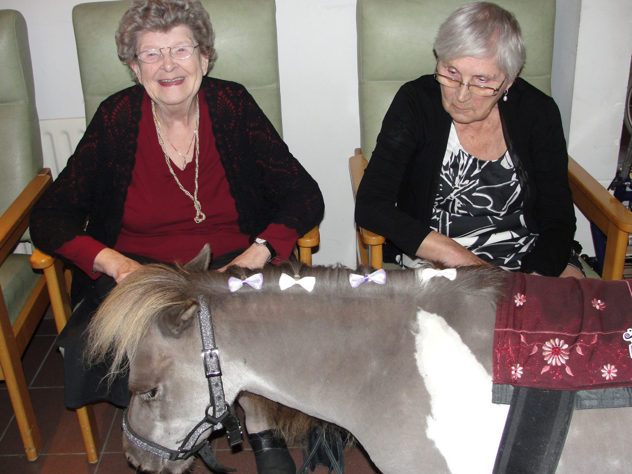 Mini-paardjes op bezoek